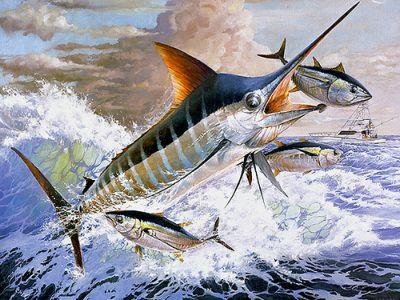 O brigador Marlim não é fácil de ser pescado