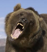 Urso pardo, 500 quilos de ferocidade