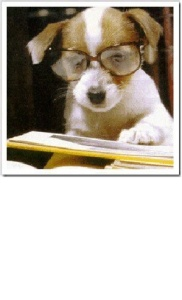 Cãozinho esperto