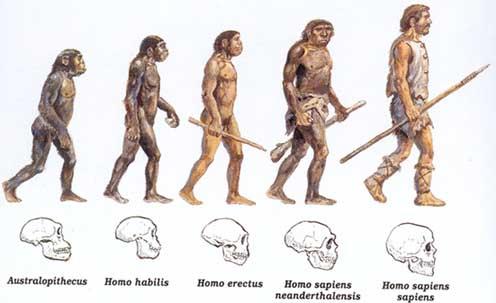 evolucao, humana, homo, sapiens, habilis, erectus, neanderthalensis