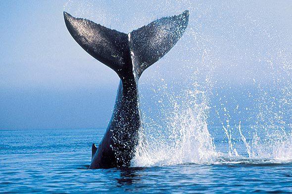 baleia-cauda-oceano(1)