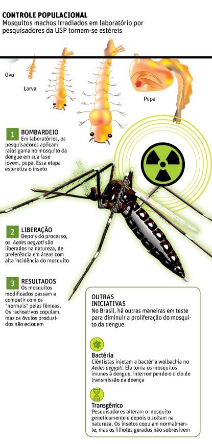 denguegrafico