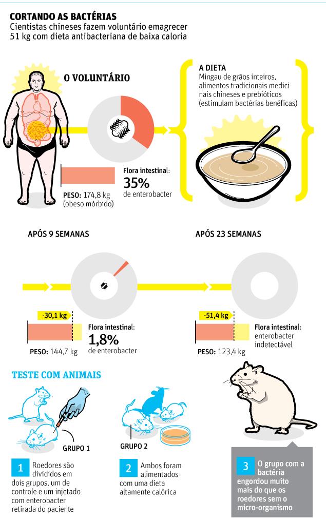 obesidade e bactéria