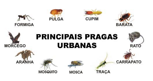 pragas_urbanas