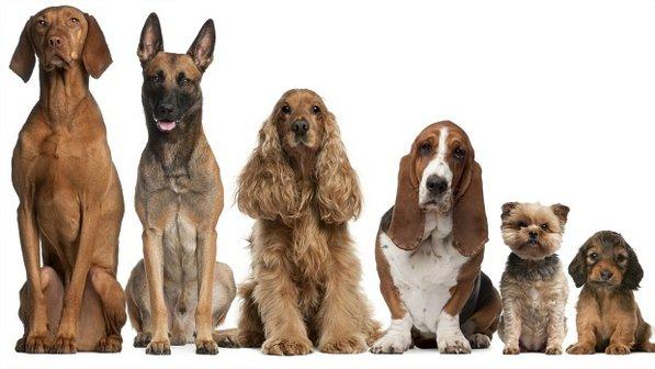 cachorro-cao-cognicao-latido
