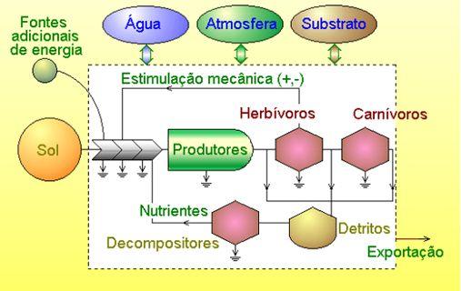 eco02_ecossistema