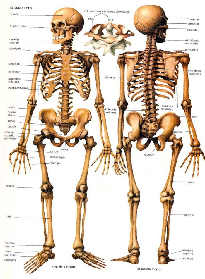 esqueleto-humano-nome-dos-ossos