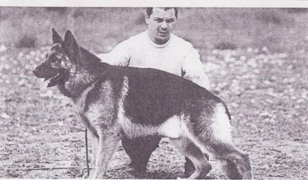 O cão heroi de Polícia Argentina