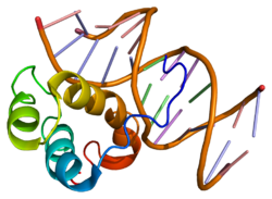 gene pitx2