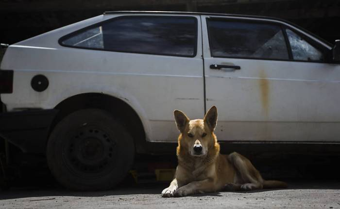 cão fidelidade