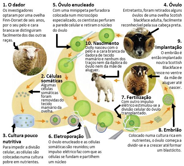 a-clonagem-da-ovelha-dolly-perguntas-e-repostas-3