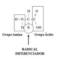 aminoacido1