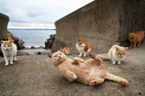cats-of-tashirojima-island-10