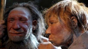 neandertal-size-598