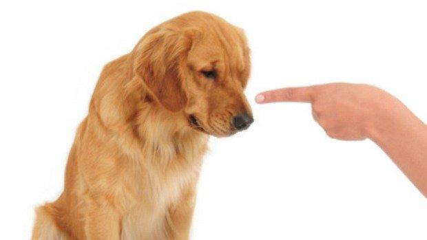 cachorro-obedecendo