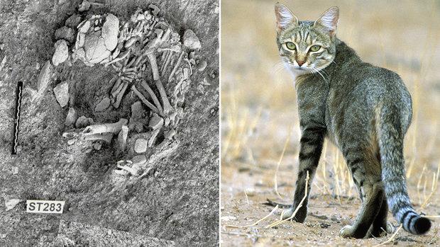 ciencia-lista-gatos-na-historia