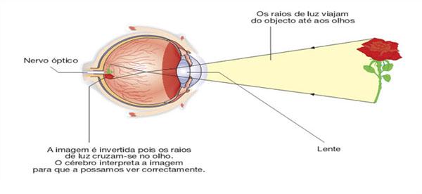 funcionamento_do_olho_humano