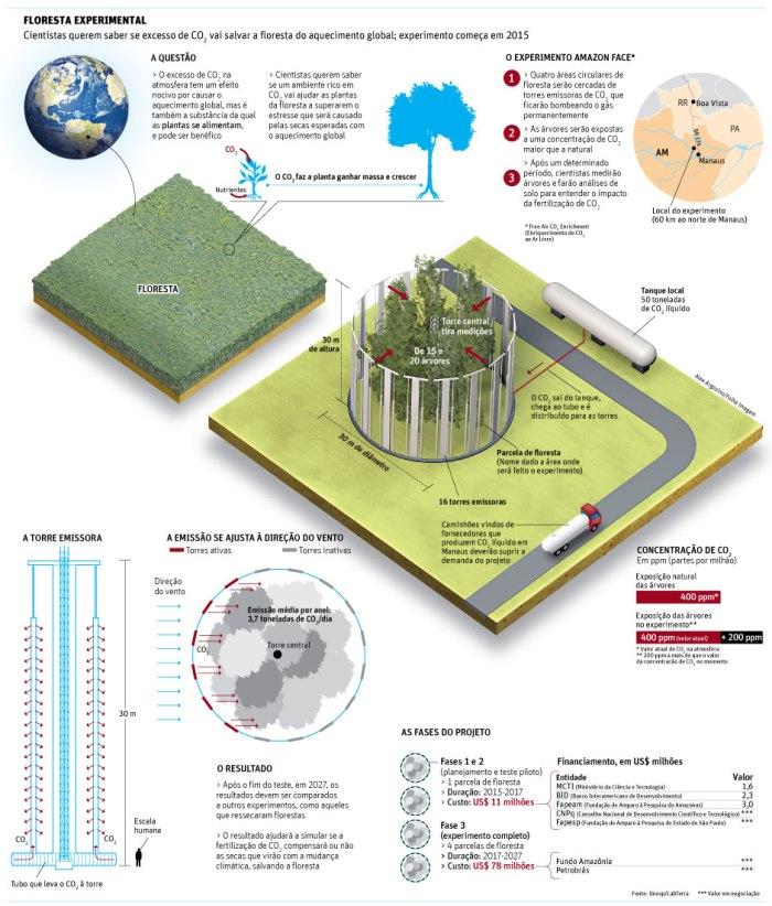 amazonia grafico