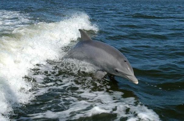 golfinhos-