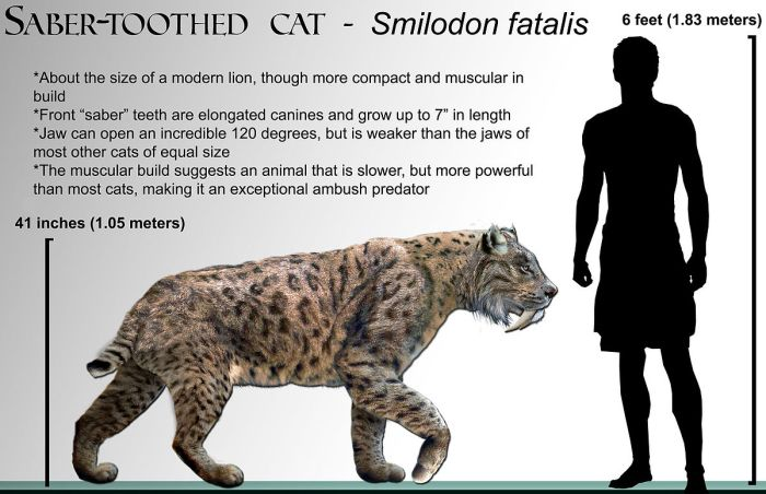 Smilodon_fatalis_life-restoration_'08