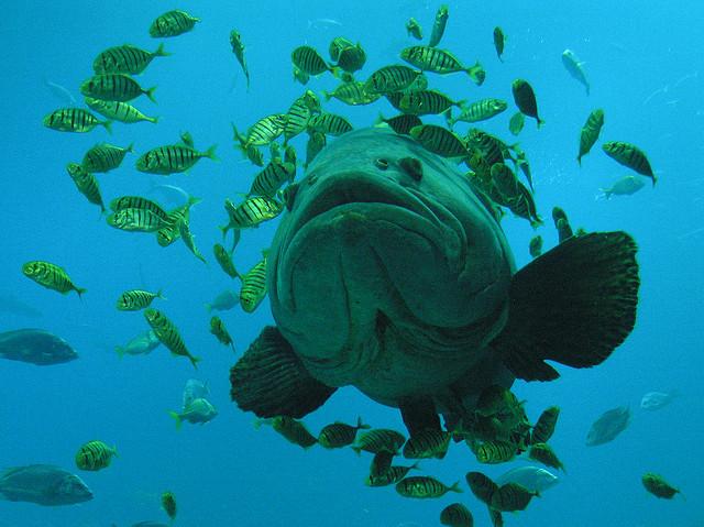 pesca-alto-mar-clima