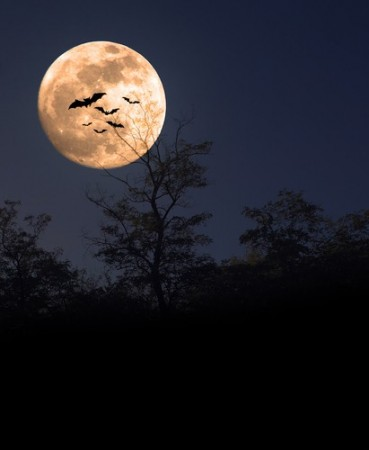 animais-noturnos-369x450