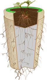 urna-biodegradavel-crescimento