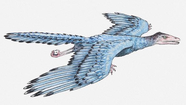 ciencia-dinossauros-archaeopteryx