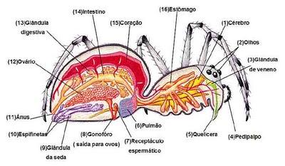 anatomia-de-uma-aranha-2