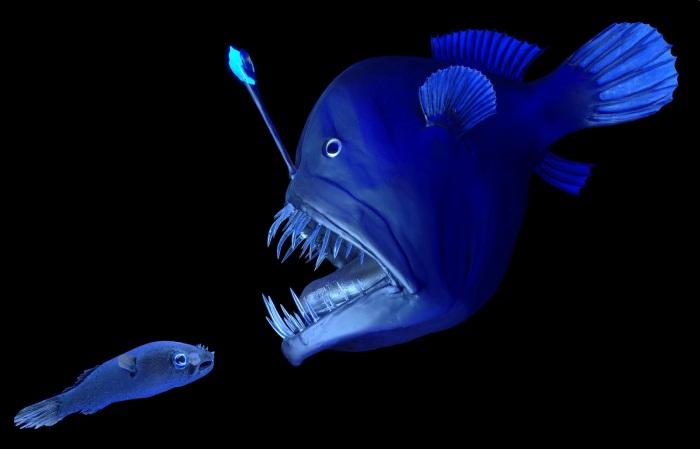 Peixe-Diabo Negro