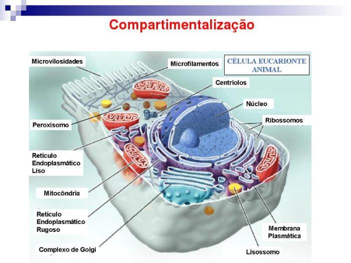 biofísica2