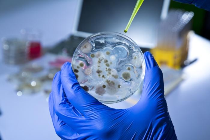 bacteria-escapa