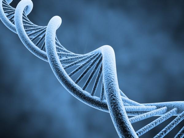 genetica2