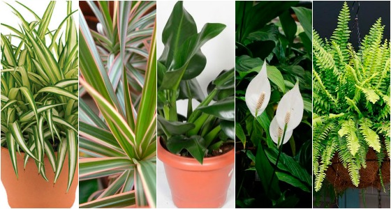 plantas-para-ambientes-fechados-que-limpam-o-ar-da-casa