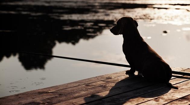 cachorro-ponte-suicidio-elena_grigorieva-shutterstock.com_