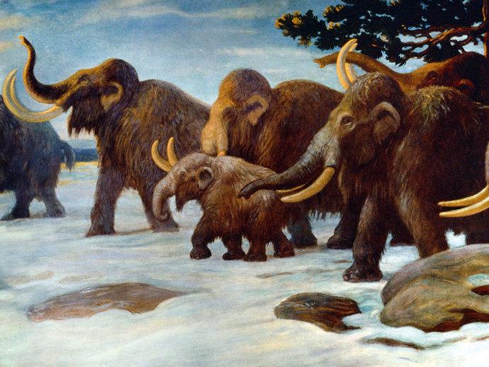 mamutes_original