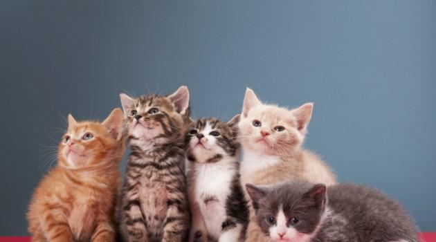 racas-de-gatos-mais-populares