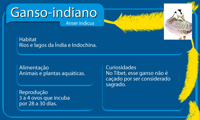 Ganso-indiano