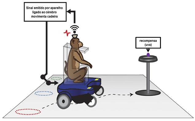 macaco cadeira
