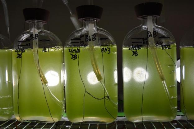 combustivel_verde_0