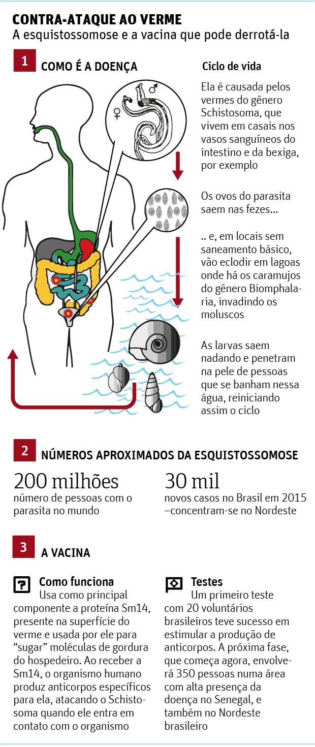 vacina grafico