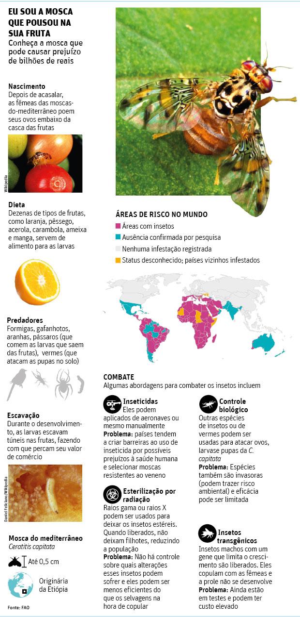 mosca-das-frutas