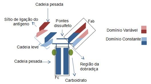 anticorpos