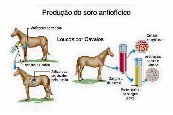 cavalo-salva-vidas