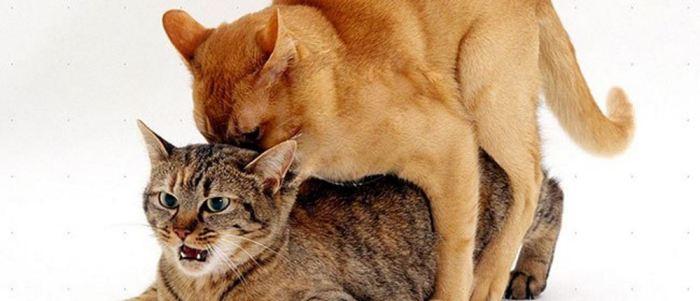 075edc4120a7f gatos   ☻Mega Arquivo