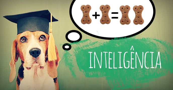 inteligencia-animal