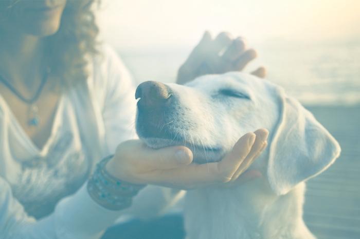 animais-de-estimac3a7c3a3o-podem-ajudar-pessoas-ansiosas1