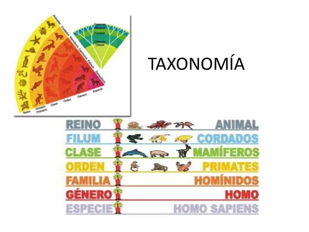 la-taxonomia-2-638