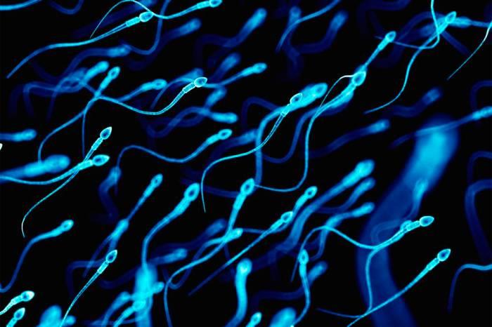 infertilidade-masculina-espermatozoide