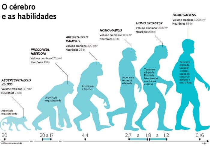 hominideo-o-cc3a9rebro-e-as-habilidades